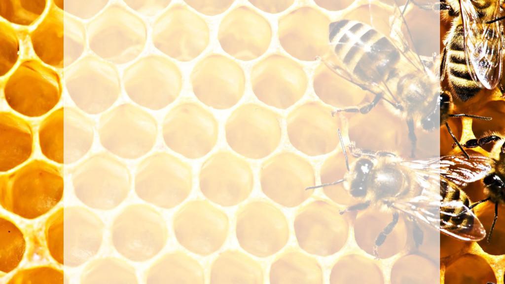 мед-и-пчелыбелый-фон1.jpg