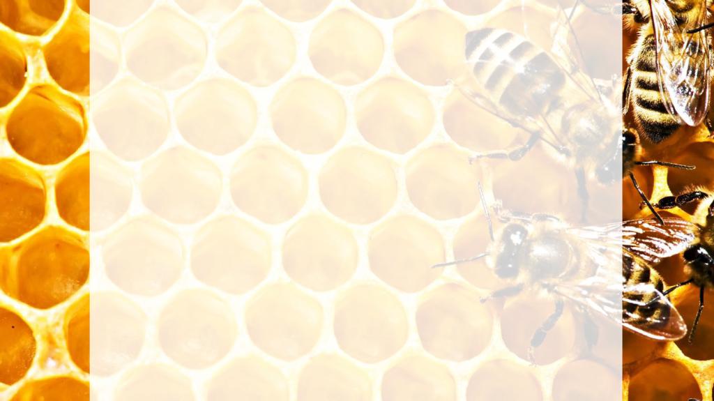 мед-и-пчелыбелый-фон1.png