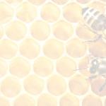 мед-и-пчелыбелый-фон11.png